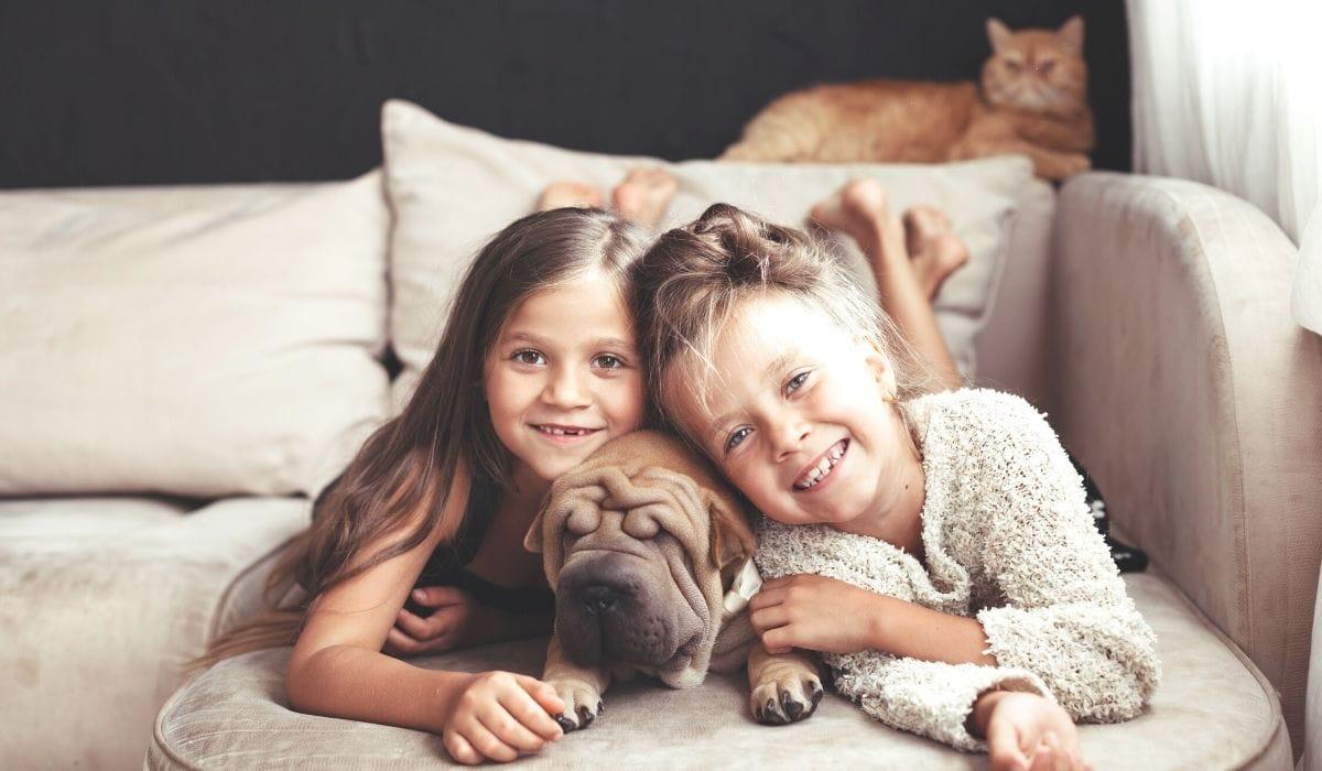 choosing the right pet insurance