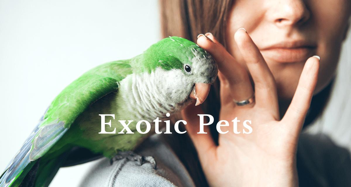 pet insurance questions